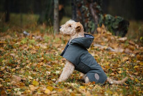 Come realizzare un impermeabile per il proprio cane