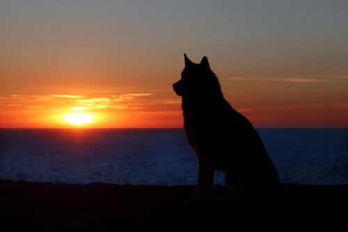 cane in spiaggia tramonto lutto