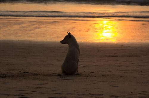 lutto cane sulla spiaggia tramonto