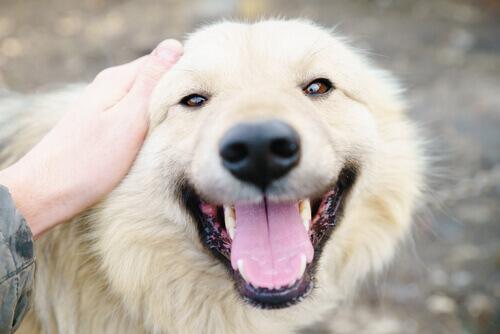 10 motivi per cui amo follemente il mio cane