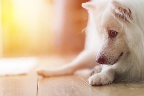 I cani possono soffrire di schizofrenia?