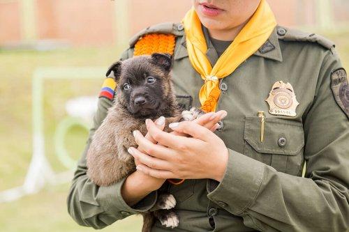 Una serie rende omaggio ai cani poliziotto