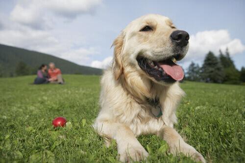 Uomini o donne, chi capisce di più i cani?
