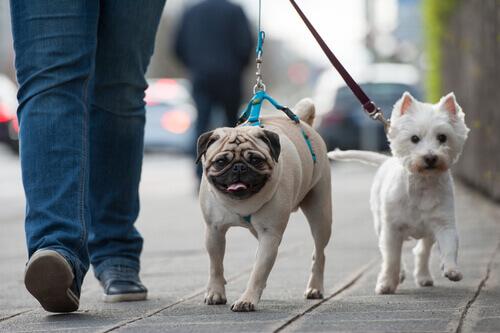8 consigli per addestrare il cane al guinzaglio