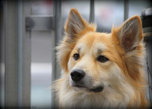 8 trucchi per pulire le orecchie al cane
