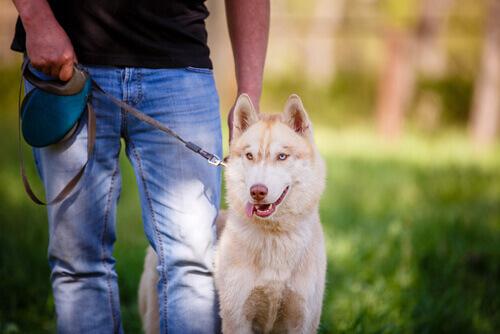 8 trucchi per essere il padrone di cane perfetto