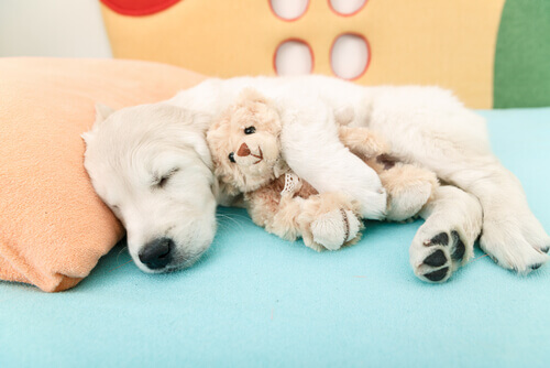 Airbnb per cani: scopriamo cos'è e come funziona