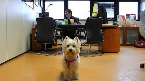 Cani in ufficio, i benefici della loro compagnia