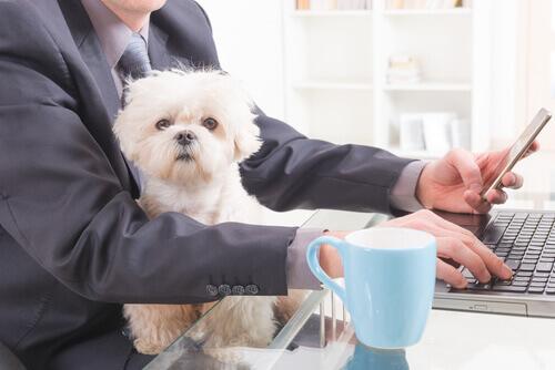 Cani in ufficio, i benefici di lavorare in compagnia