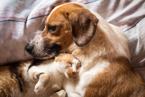 Come curare la diarrea in cani e gatti facilmente