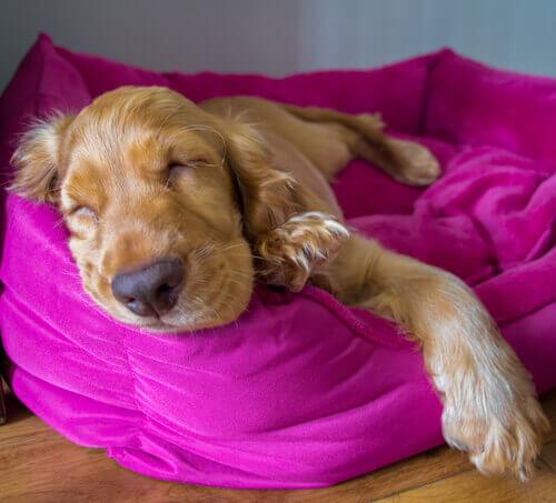 Come sono i sogni dei cani?