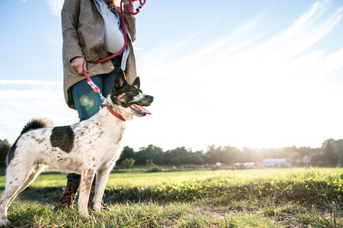 cane al guinzaglio in campagna