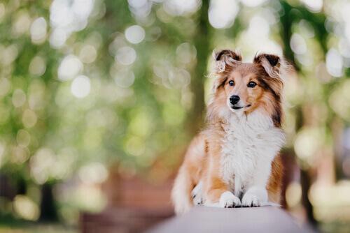 Le 7 razze di cani più intelligenti al mondo