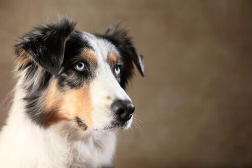 I cani possono ingannare gli esseri umani?
