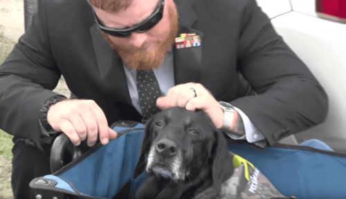 Il commovente addio dei Marines al cane Cena