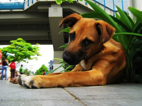 Il vostro cane mangia le piante? Ecco come evitarlo