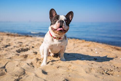 L'acqua di mare fa bene al vostro cane?