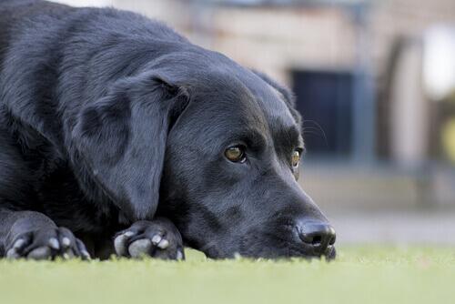 Malattie dei cani anziani, quali sono e come curarle