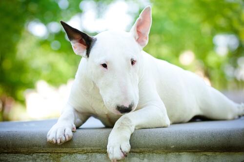 cane bianco seduto sul muro