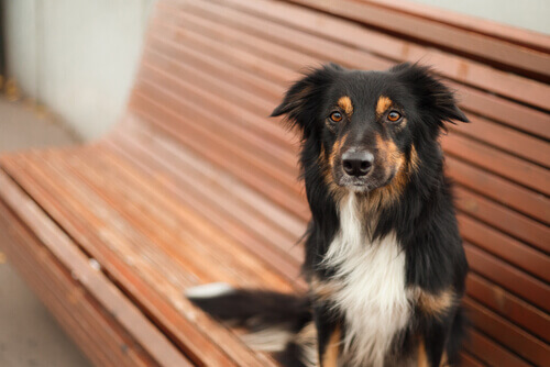Vantaggi e svantaggi di sterilizzare cani e gatti