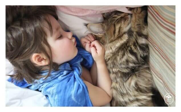 Bambina dorme con gatto