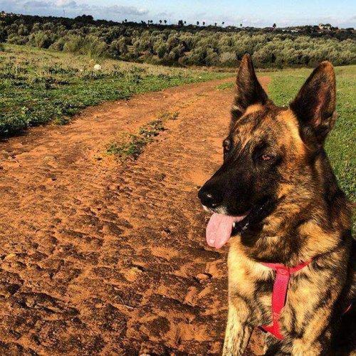 Cose da sapere sulle multe destinate ai padroni dei cani