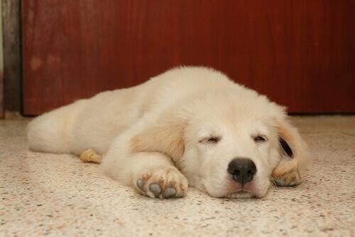 Scopriamo che cosa sognano i cani