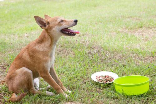 Scoprite come trattare il vomito del cane