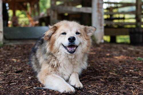 Displasia dell'anca nei cani: cos'è e come trattarla