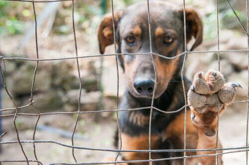 Qual è il profilo di un cane abbandonato?