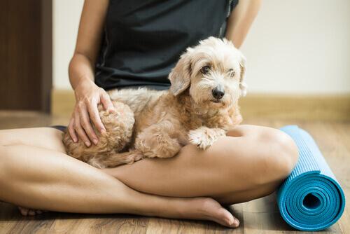 cane seduto su gambe della padrona e tappetino
