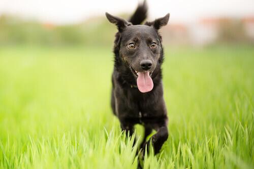 vantaggi adottare cani meticci