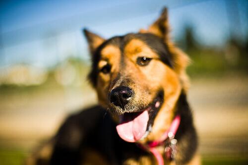 cane con la lingua in fuori