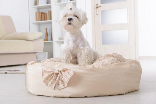 salotto-e-cane-bianco-su-materassino