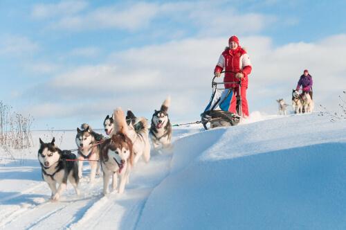 husky trainano slitta sulla neve