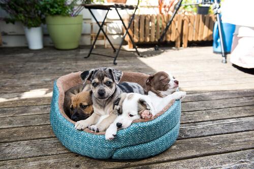 cagnolini-nella-cuccia-in-giardino