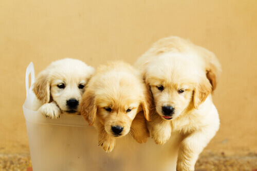 cuccioli di cane nella cesta