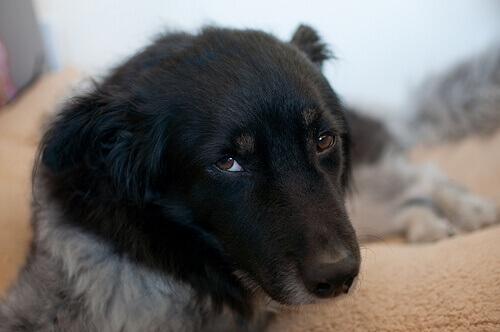 Ehrlichiosi canina: di cosa si tratta?