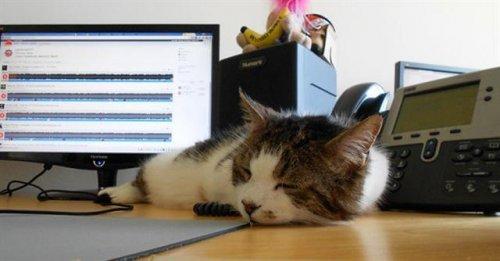 gatto dorme sulla scrivania vicino al computer