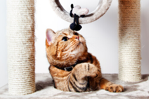 Gatto gioca con tiragraffi