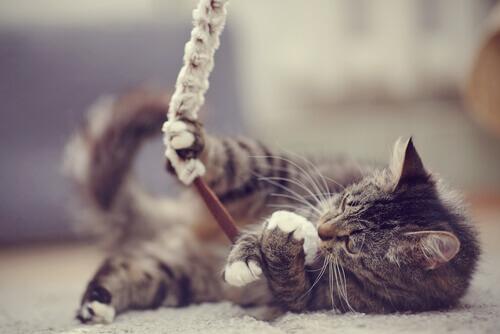 7 modi per dimostrare al vostro gatto che gli volete bene