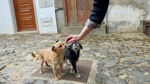 6 consigli per guadagnarsi la fiducia del cane