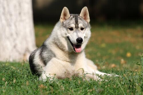 Anche i cani possiedono l'intelligenza emotiva?
