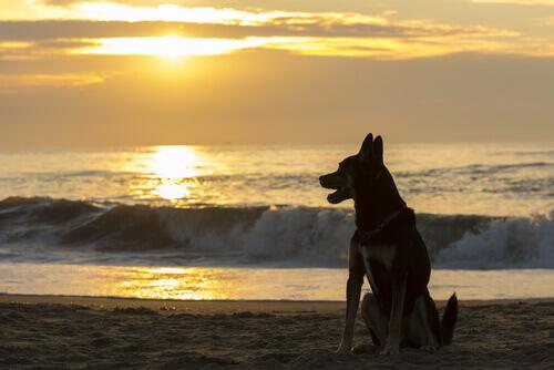 Quanto aspettare per un nuovo cane dopo la morte del precedente?