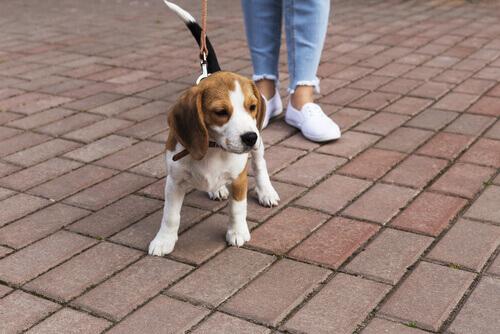 Tutto quello che c'è da sapere sulla parodontite nei cani