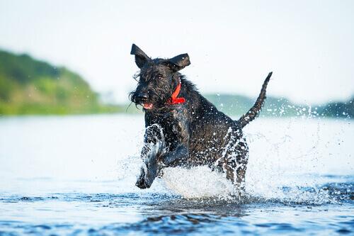 Quali sono le razze di cani più sportive?