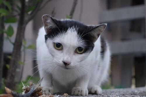 6 comportamenti strani dei gatti da conoscere