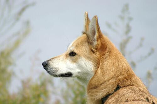 8 consigli per evitare di essere morsi da un cane
