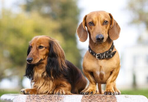 Cani del gruppo 4: classificazione delle razze secondo la FCI