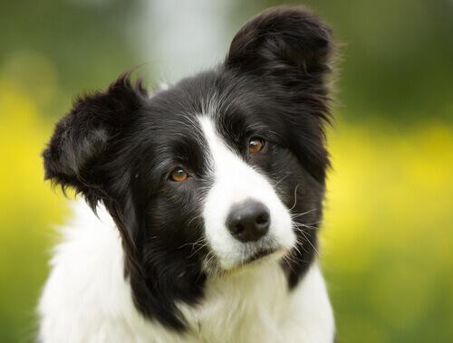 cane bianco e nero